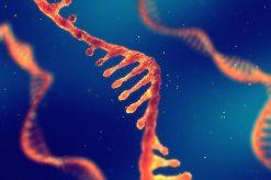 Messenger RNA production